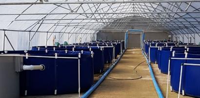 Rydawi Tilapia Fish Farms & Aquaculture – Tilapia fish